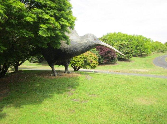 Kiwi 6