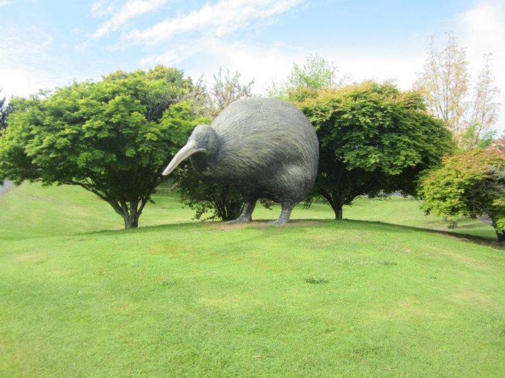 Kiwi 8